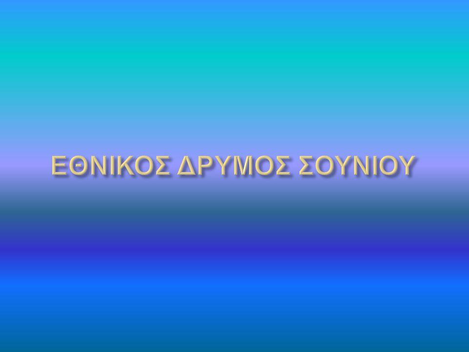 ΕΘΝΙΚΟΣ ΔΡΥΜΟΣ ΣΟΥΝΙΟΥ