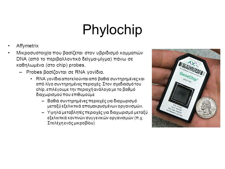 Phylochip Affymetrix.