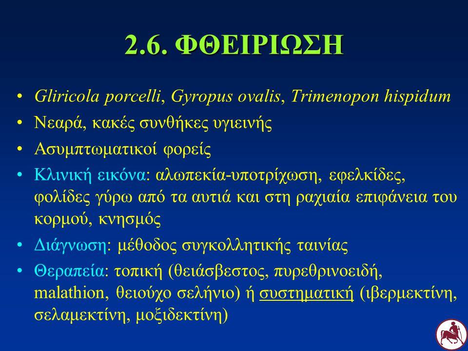 2.6. ΦΘΕΙΡΙΩΣΗ Gliricola porcelli, Gyropus ovalis, Trimenopon hispidum