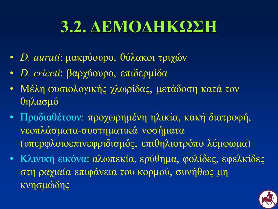 3.2. ΔΕΜΟΔΗΚΩΣΗ D. aurati: μακρύουρο, θύλακοι τριχών