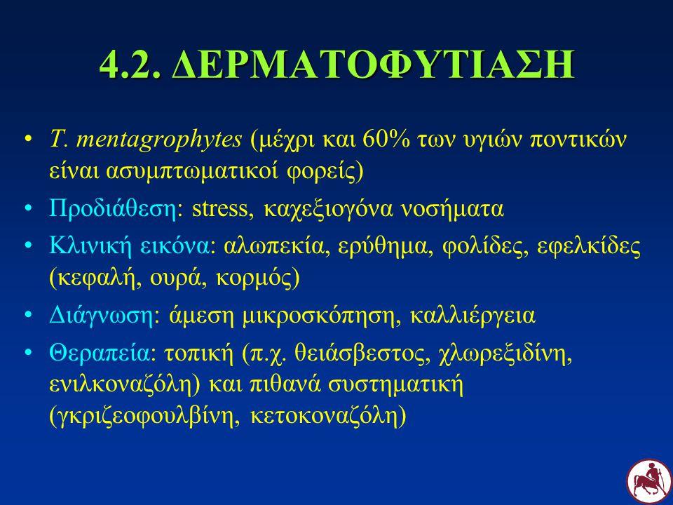 4.2. ΔΕΡΜΑΤΟΦΥΤΙΑΣΗ T. mentagrophytes (μέχρι και 60% των υγιών ποντικών είναι ασυμπτωματικοί φορείς)