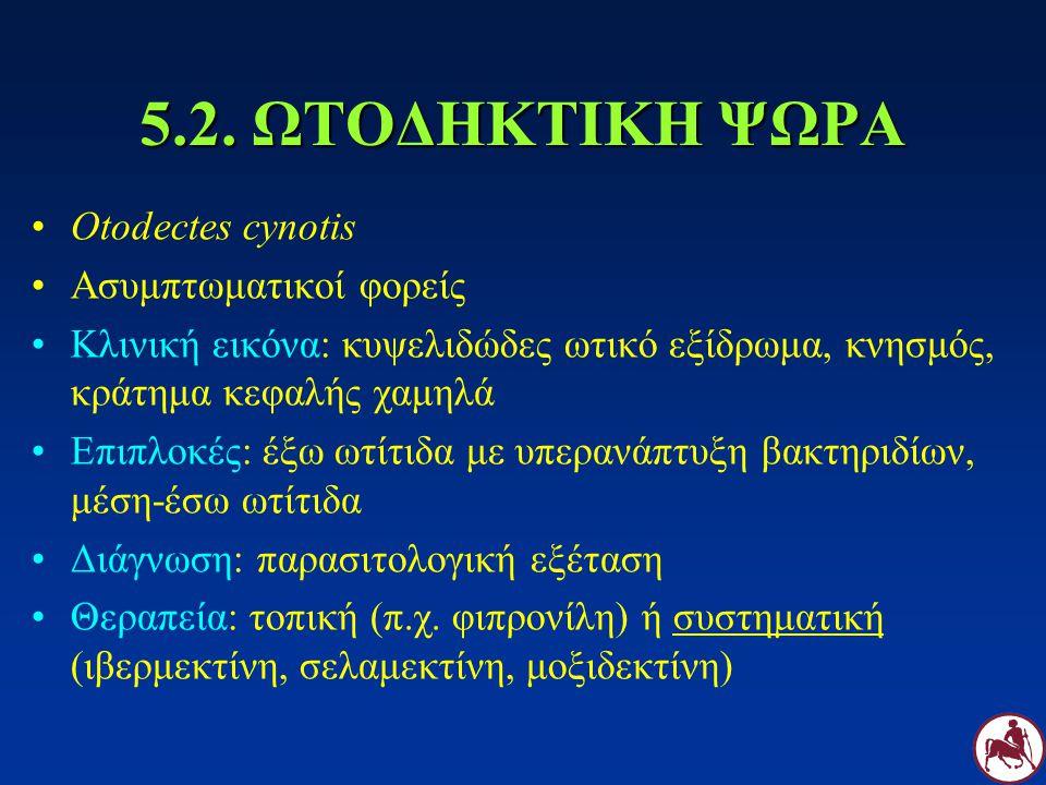 5.2. ΩΤΟΔΗΚΤΙΚΗ ΨΩΡΑ Otodectes cynotis Ασυμπτωματικοί φορείς