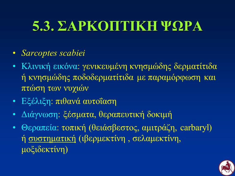 5.3. ΣΑΡΚΟΠΤΙΚΗ ΨΩΡΑ Sarcoptes scabiei