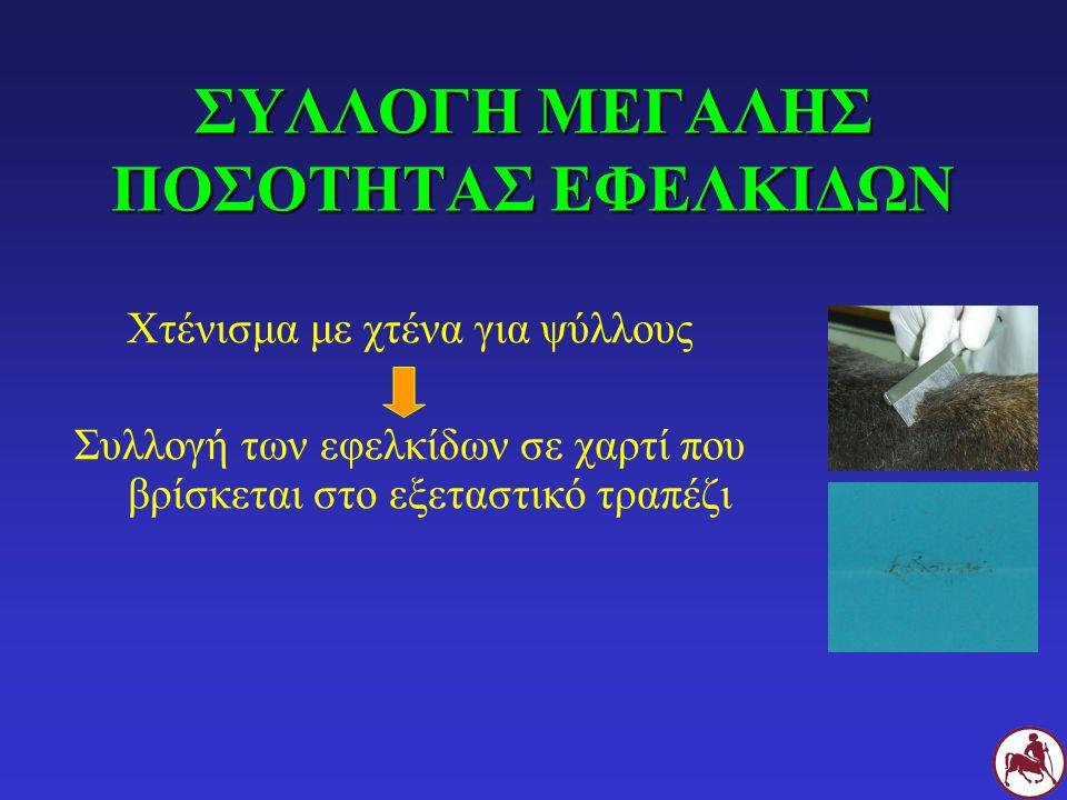 ΣΥΛΛΟΓΗ ΜΕΓΑΛΗΣ ΠΟΣΟΤΗΤΑΣ ΕΦΕΛΚΙΔΩΝ