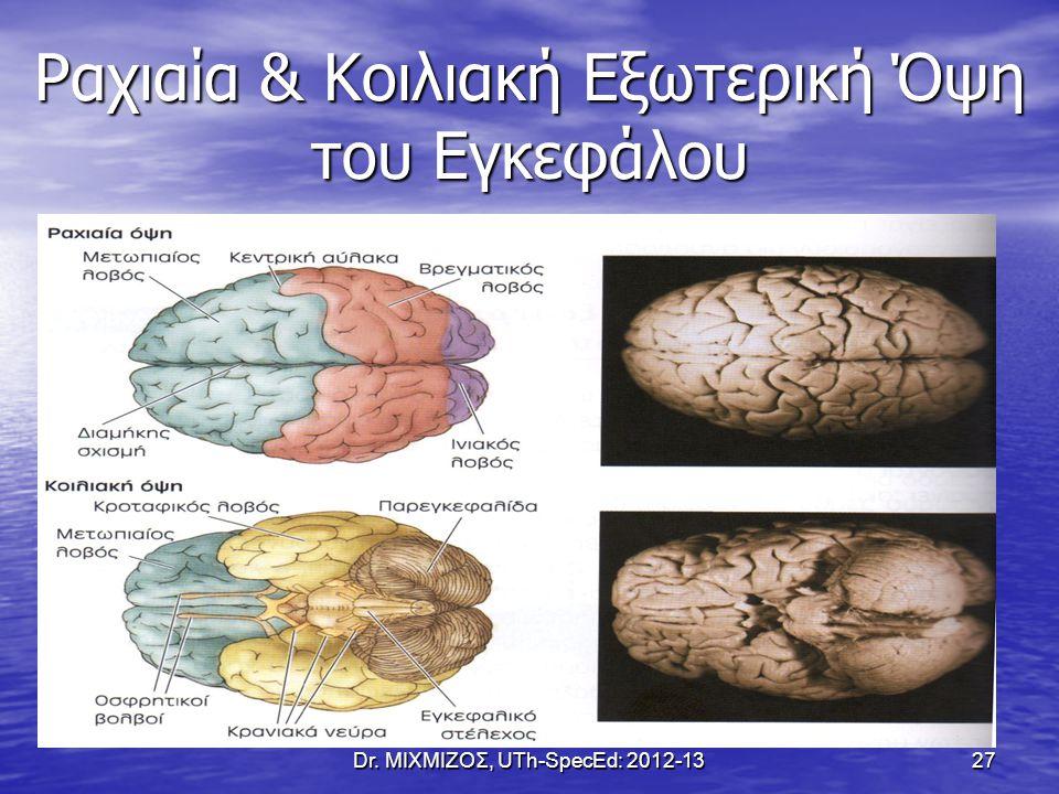Ραχιαία & Κοιλιακή Εξωτερική Όψη του Εγκεφάλου