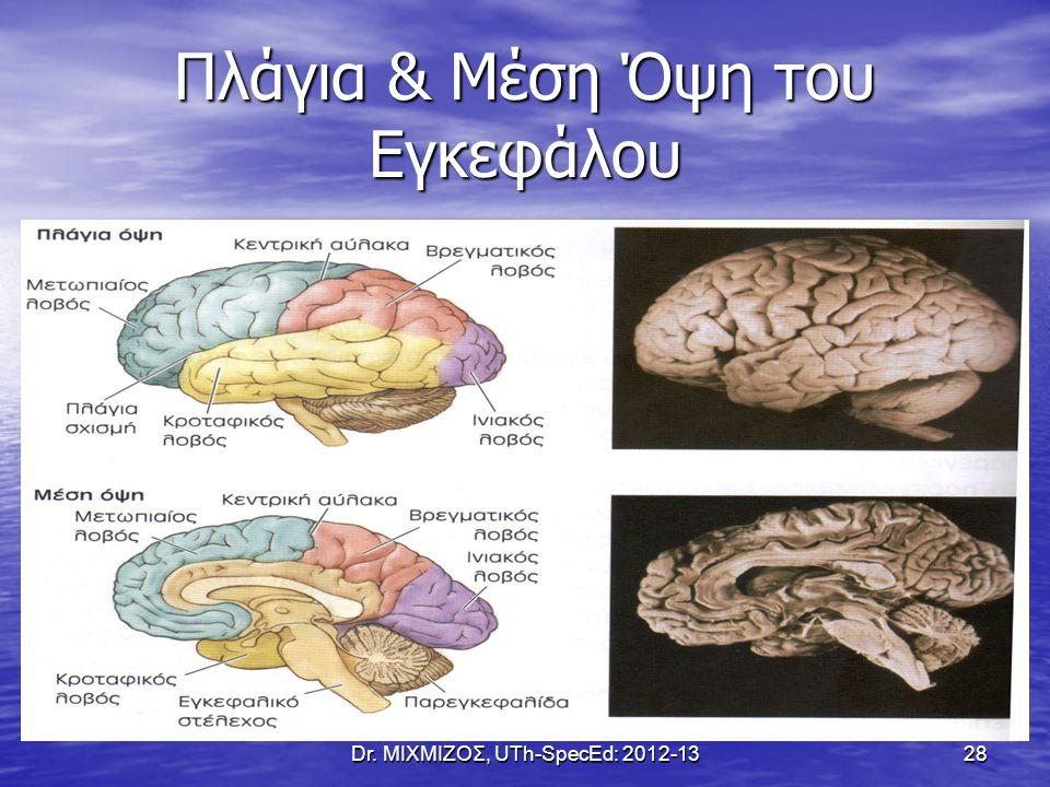 Πλάγια & Μέση Όψη του Εγκεφάλου