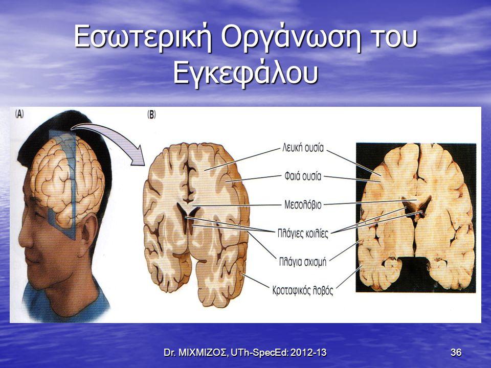 Εσωτερική Οργάνωση του Εγκεφάλου