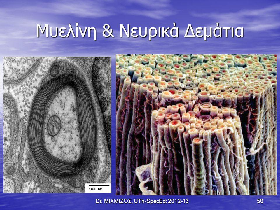 Μυελίνη & Νευρικά Δεμάτια