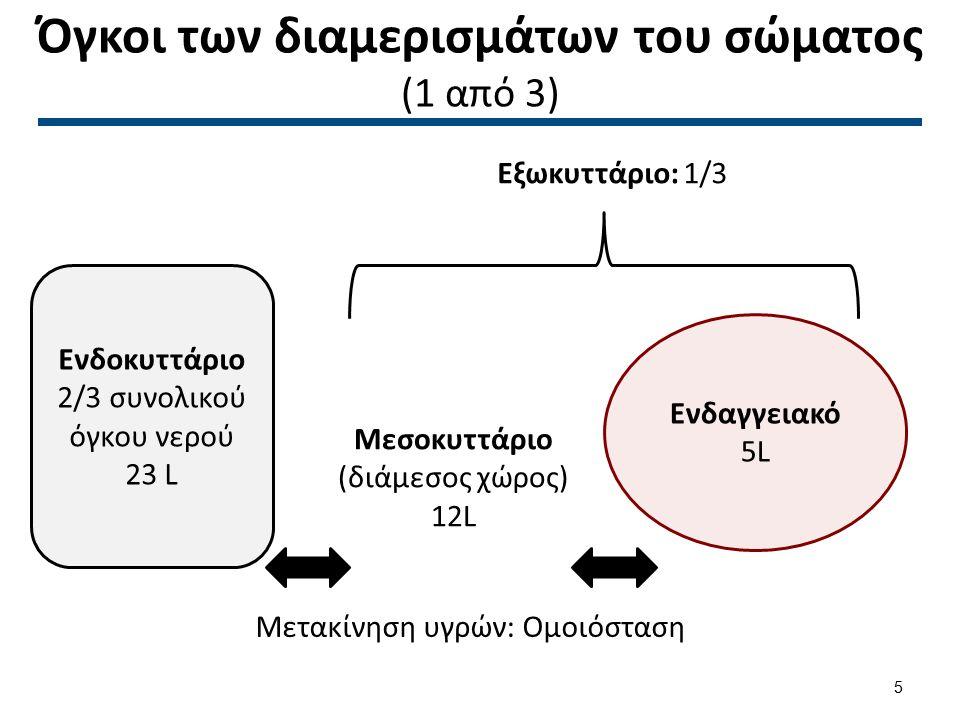 Όγκοι των διαμερισμάτων του σώματος (2 από 3)