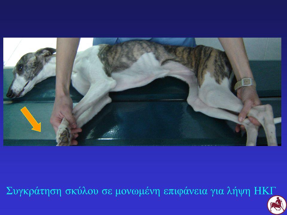 Συγκράτηση σκύλου σε μονωμένη επιφάνεια για λήψη ΗΚΓ