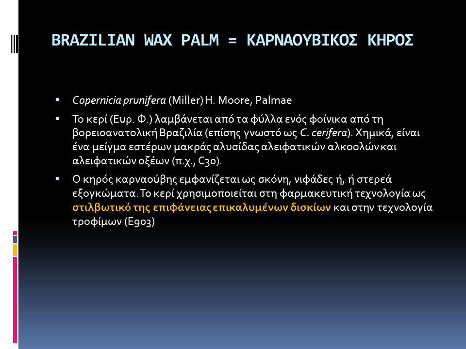BRAZILIAN WAX PALM = ΚΑΡΝΑΟΥΒΙΚΟΣ ΚΗΡΟΣ