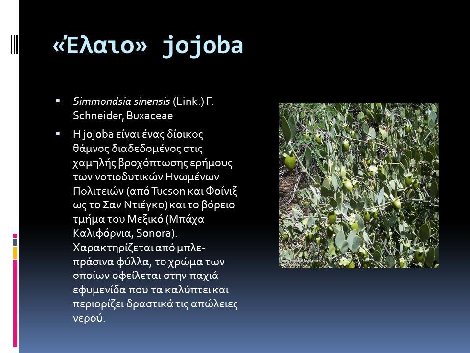 «Έλαιο» jojoba Simmondsia sinensis (Link.) Γ. Schneider, Buxaceae