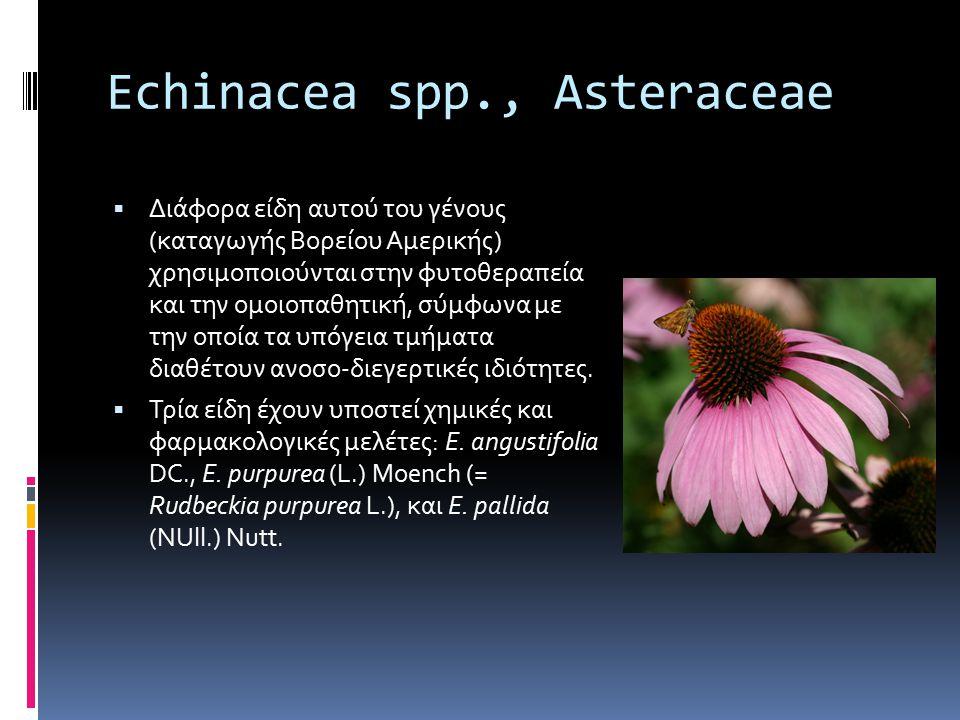 Echinacea spp., Asteraceae