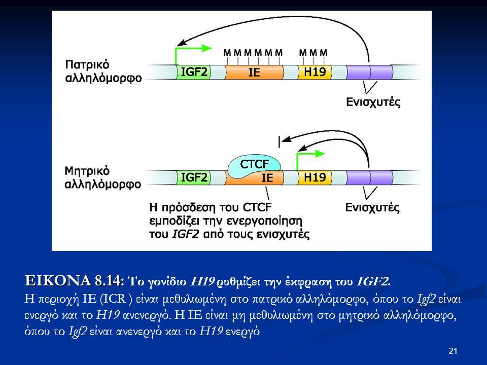 ΕΙΚΟΝΑ 8.14: Το γονίδιο Η19 ρυθμίζει την έκφραση του IGF2.