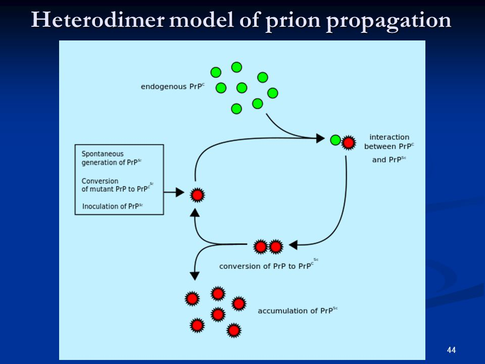 Heterodimer model of prion propagation