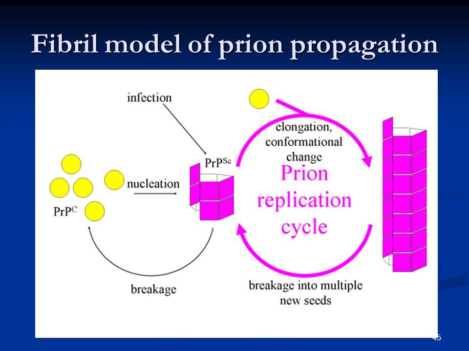 Fibril model of prion propagation