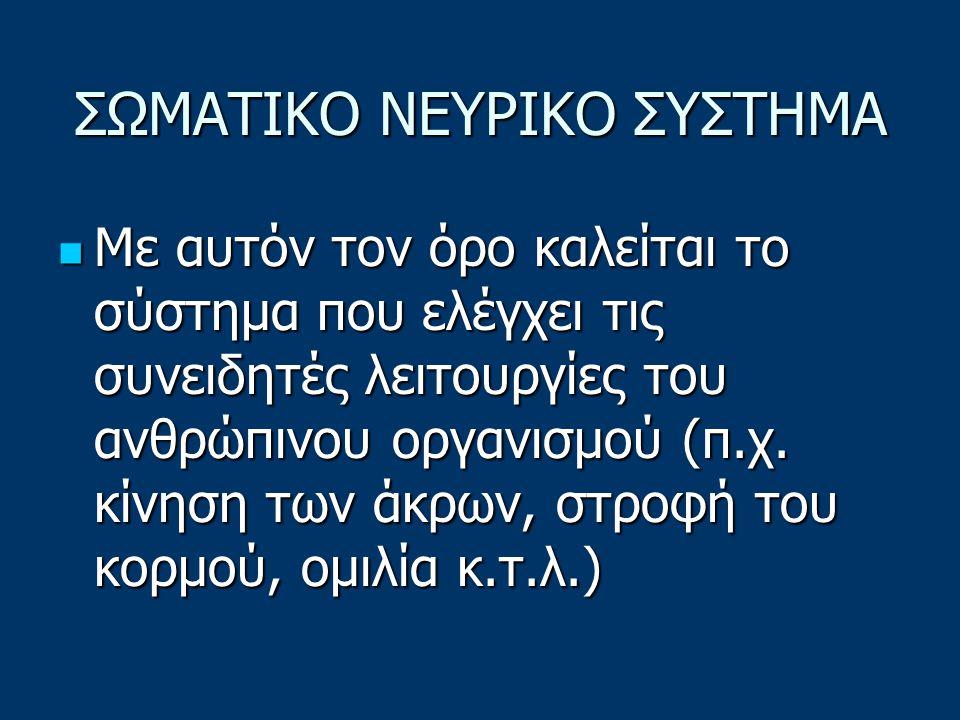 ΣΩΜΑΤΙΚΟ ΝΕΥΡΙΚΟ ΣΥΣΤΗΜΑ