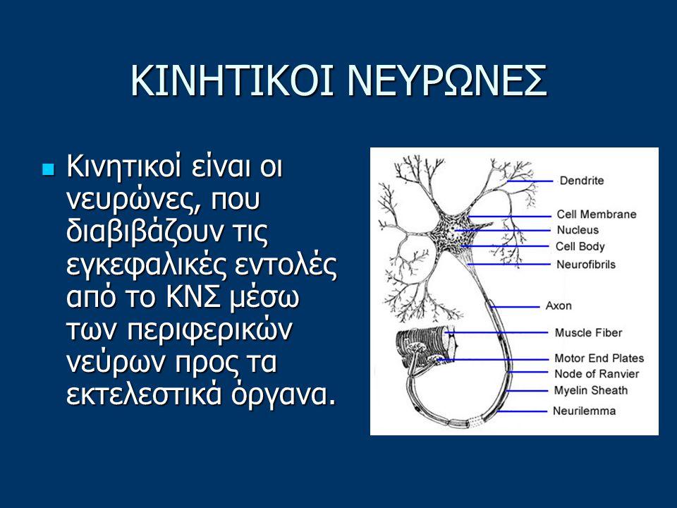 ΚΙΝΗΤΙΚΟΙ ΝΕΥΡΩΝΕΣ