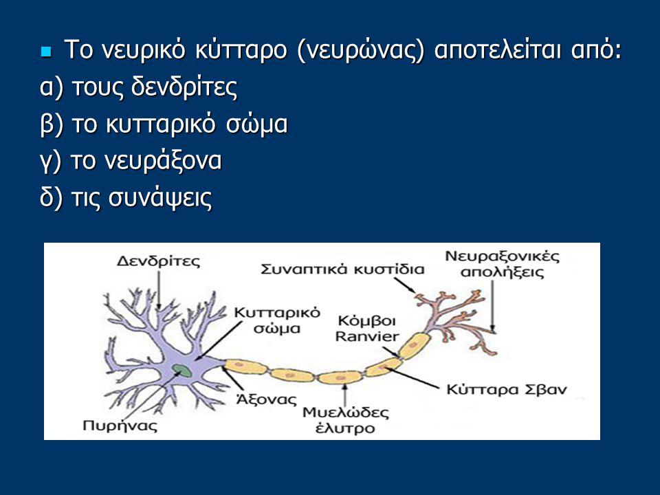Το νευρικό κύτταρο (νευρώνας) αποτελείται από: