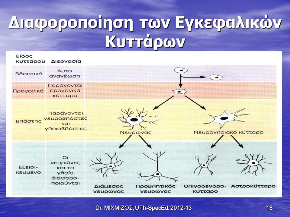 Διαφοροποίηση των Εγκεφαλικών Κυττάρων