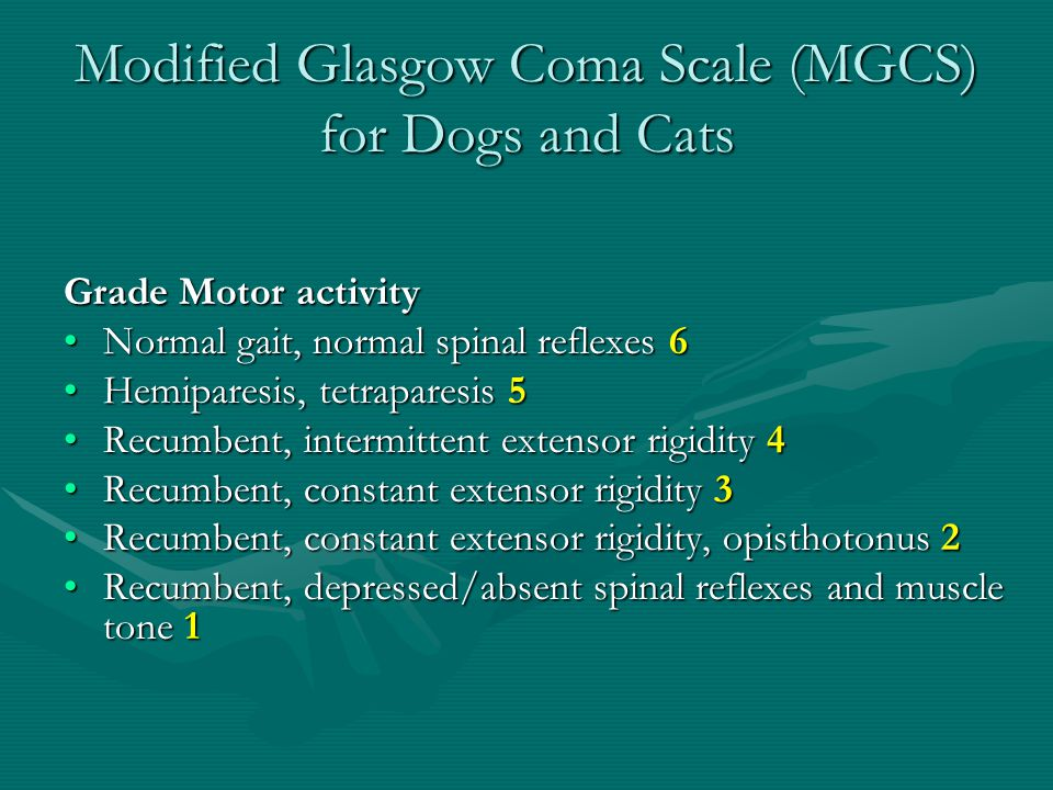 Modified Glasgow Coma Scale (MGCS) for Dogs and Cats