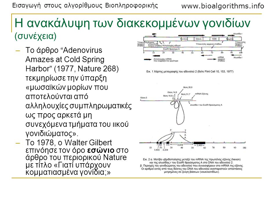 Η ανακάλυψη των διακεκομμένων γονιδίων (συνέχεια)