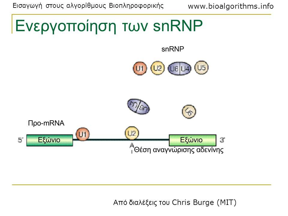 Ενεργοποίηση των snRNP