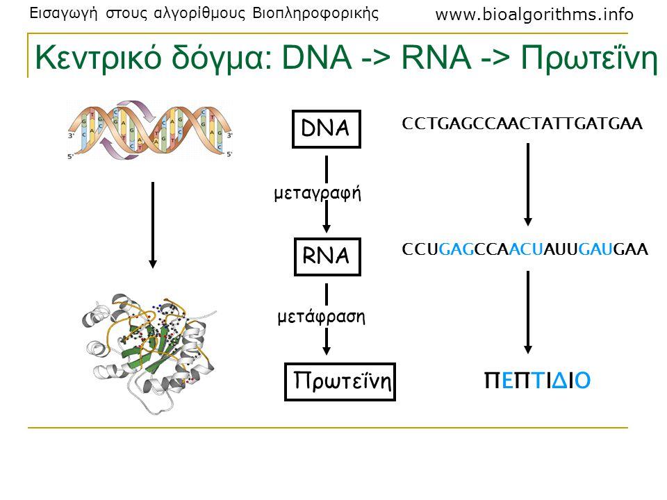 Κεντρικό δόγμα: DNA -> RNA -> Πρωτεΐνη