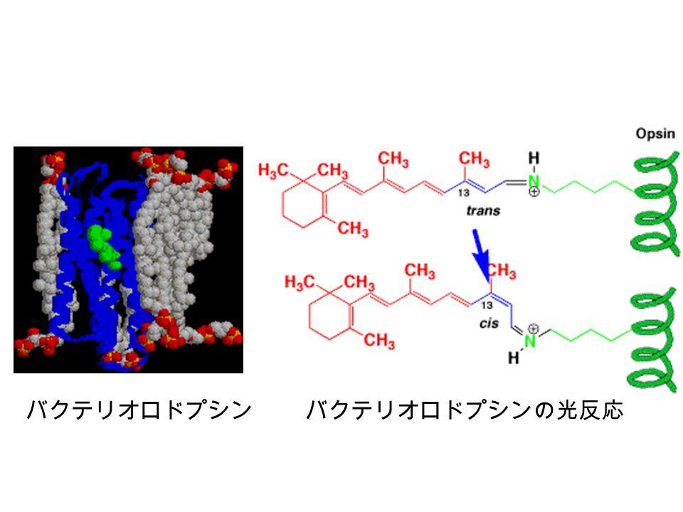 バクテリオロドプシン バクテリオロドプシンの光反応