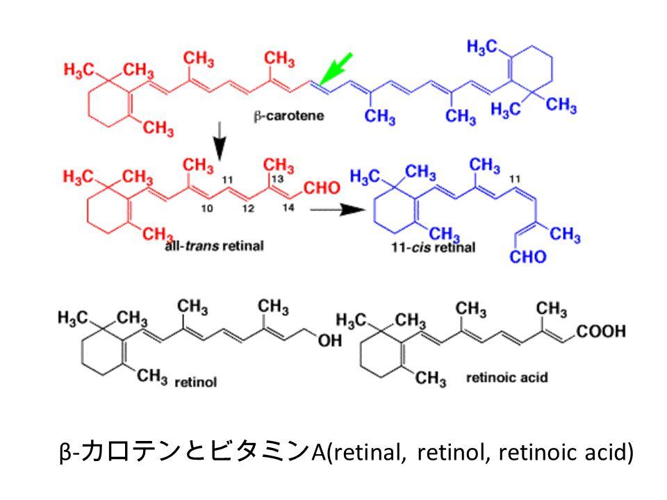 β-カロテンとビタミンA(retinal, retinol, retinoic acid)