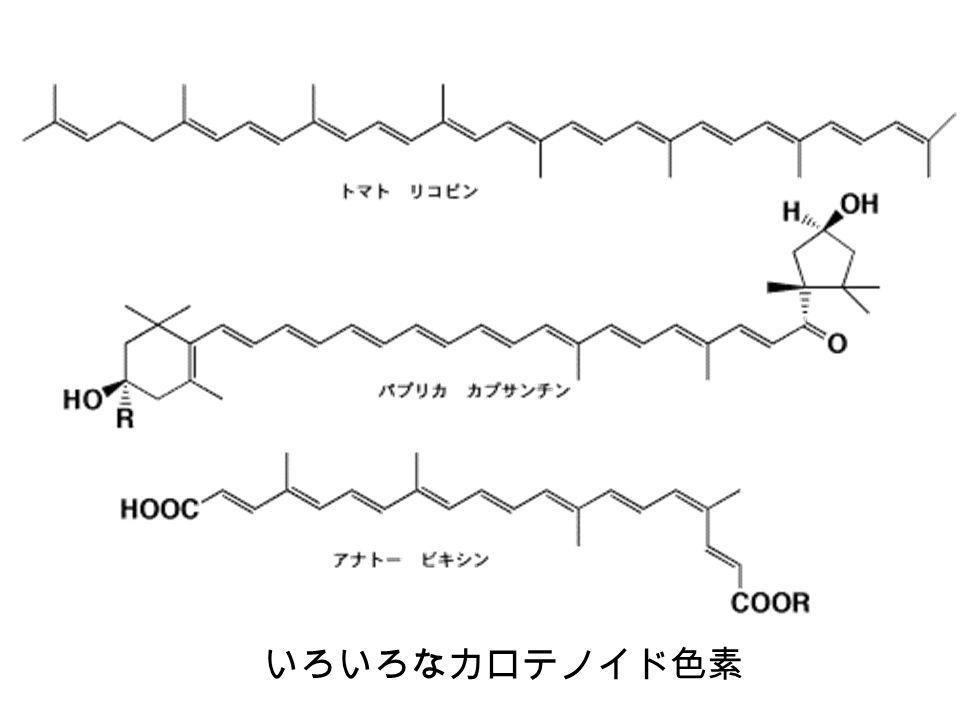 いろいろなカロテノイド色素