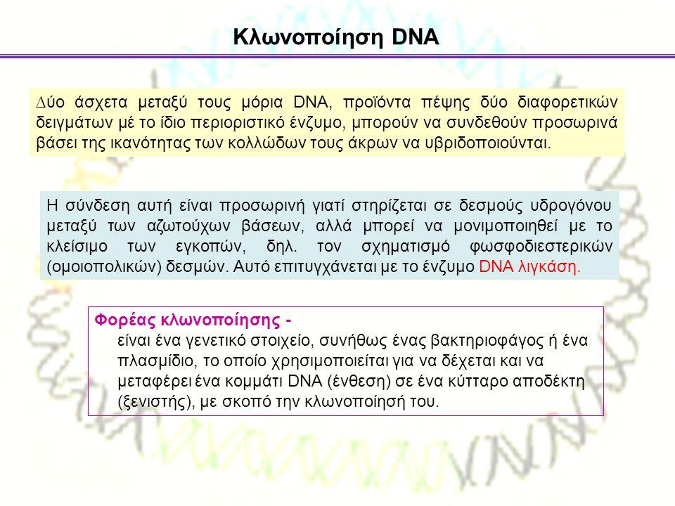 Κλωνοποίηση DNA