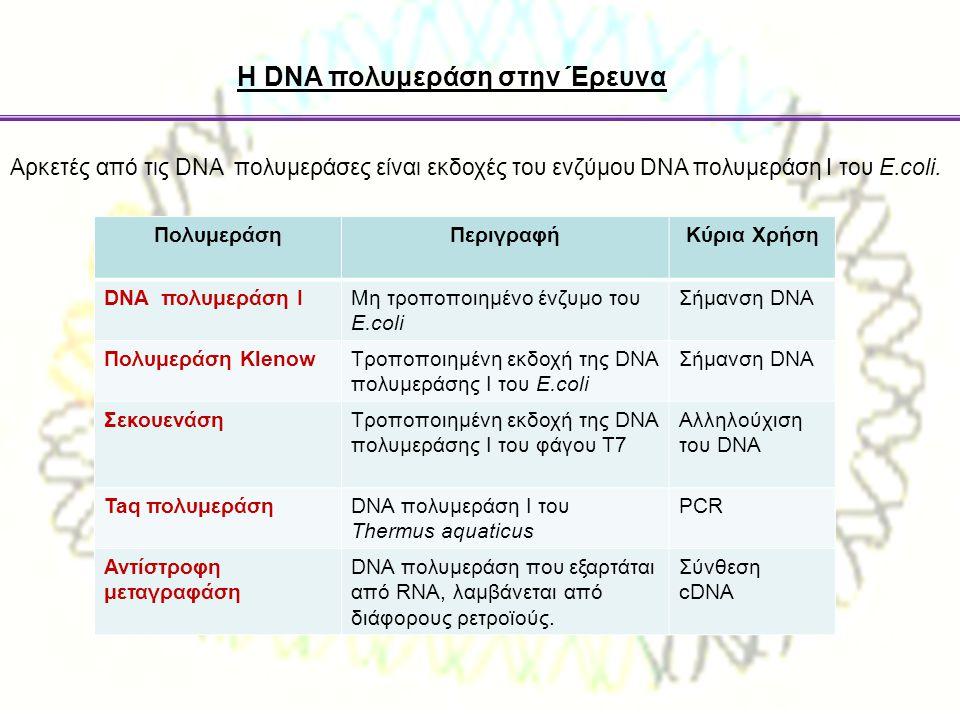 Η DNA πολυμεράση στην Έρευνα