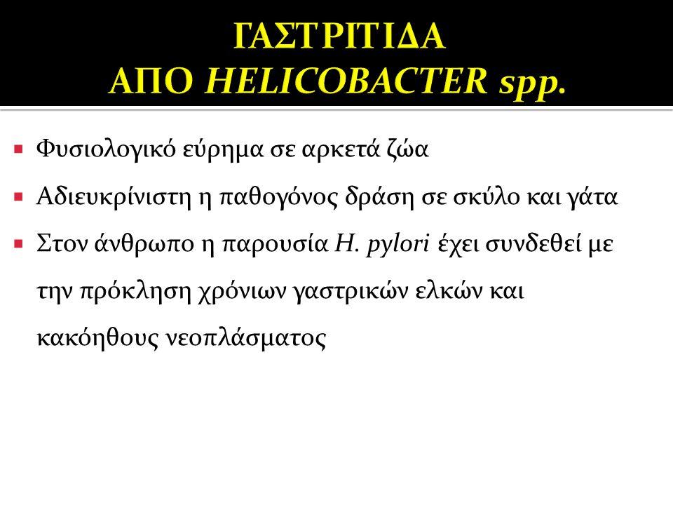 ΓΑΣΤΡΙΤΙΔΑ ΑΠΟ HELICOBACTER spp.