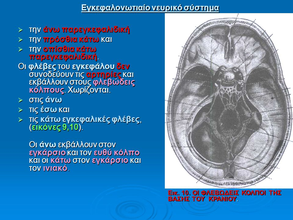 Εγκεφαλονωτιαίο νευρικό σύστημα