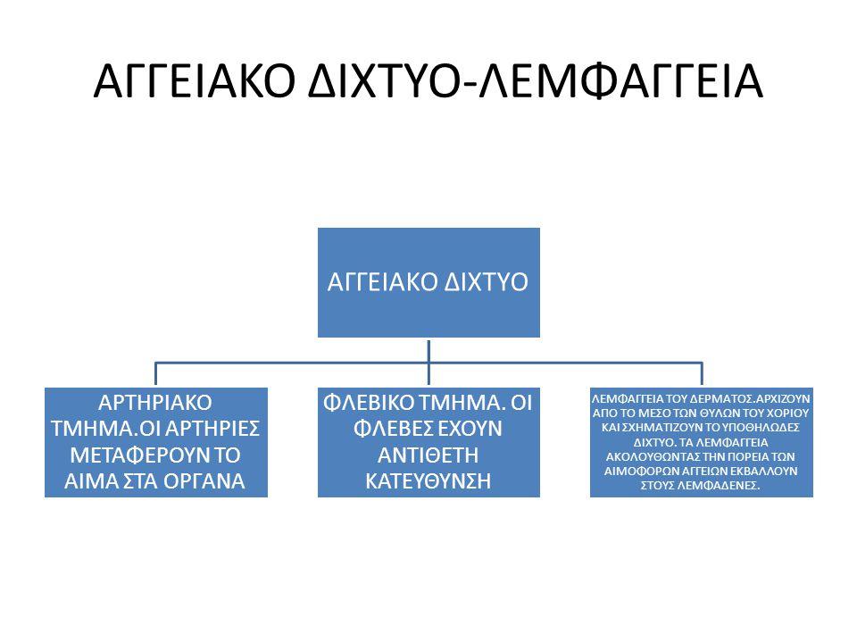 ΑΓΓΕΙΑΚΟ ΔΙΧΤΥΟ-ΛΕΜΦΑΓΓΕΙΑ