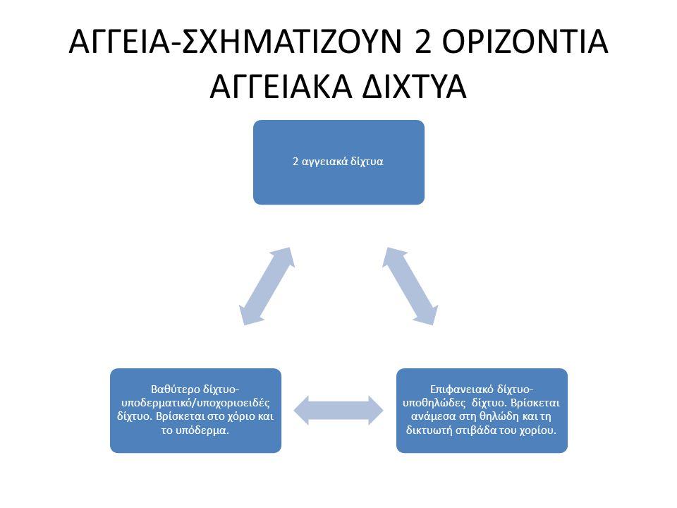 ΑΓΓΕΙΑ-ΣΧΗΜΑΤΙΖΟΥΝ 2 ΟΡΙΖΟΝΤΙΑ ΑΓΓΕΙΑΚΑ ΔΙΧΤΥΑ
