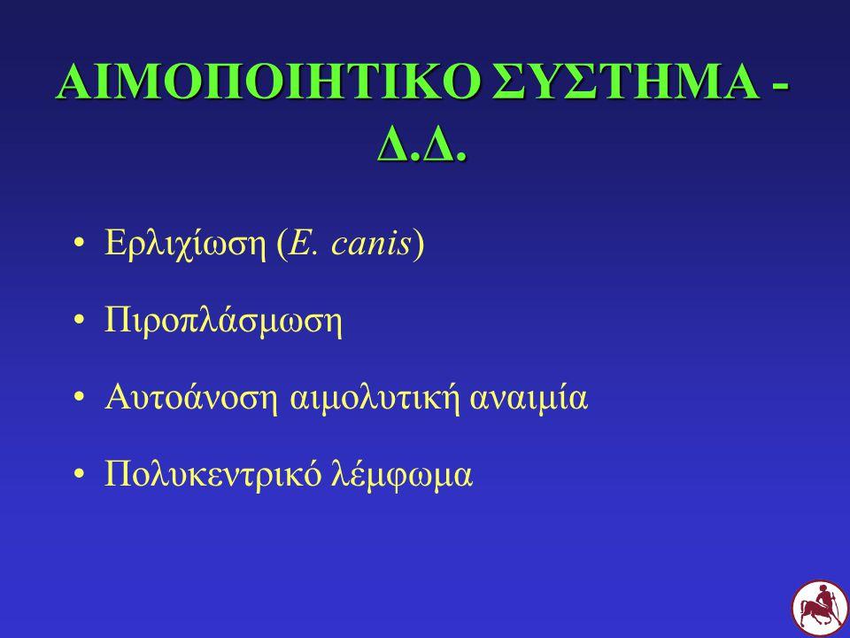 ΑΙΜΟΠΟΙΗΤΙΚΟ ΣΥΣΤΗΜΑ - Δ.Δ.