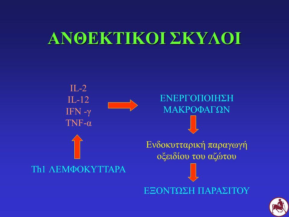 ΑΝΘΕΚΤΙΚΟΙ ΣΚΥΛΟΙ IL-2 IL-12 ΕΝΕΡΓΟΠΟΙΗΣΗ ΜΑΚΡΟΦΑΓΩΝ IFN -γ TNF-α