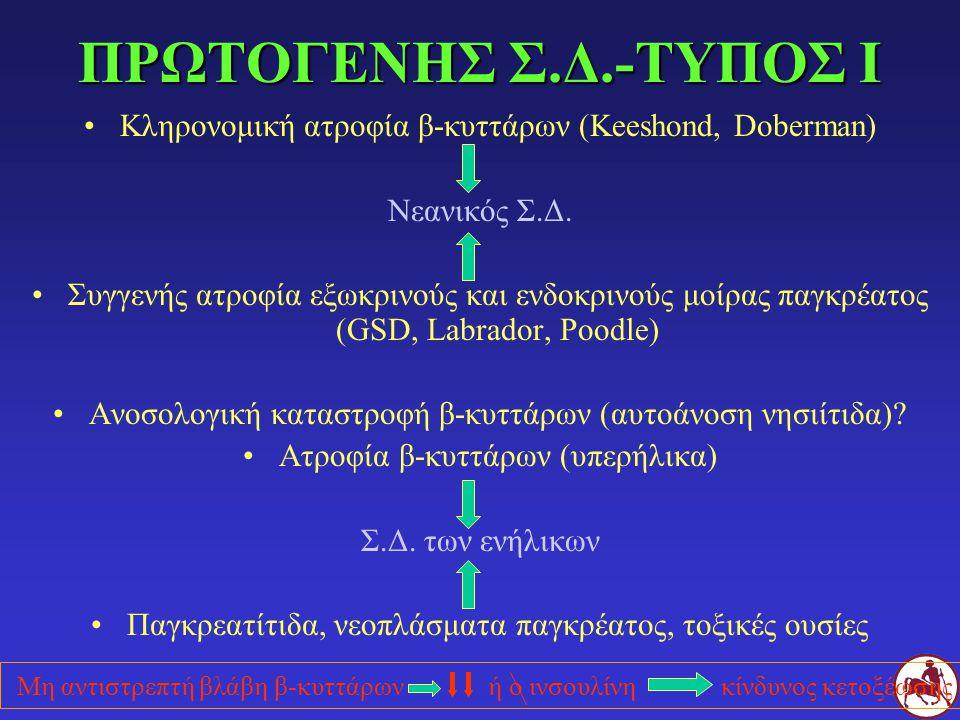 ΠΡΩΤΟΓΕΝΗΣ Σ.Δ.-ΤΥΠΟΣ Ι Κληρονομική ατροφία β-κυττάρων (Keeshond, Doberman) Νεανικός Σ.Δ.