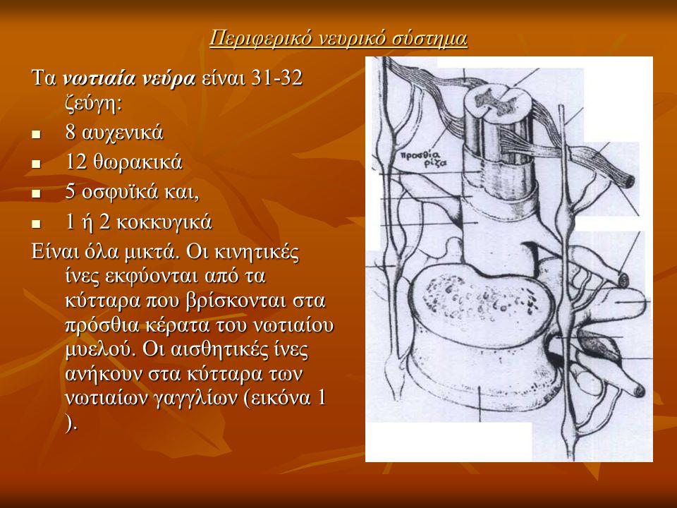 Περιφερικό νευρικό σύστημα