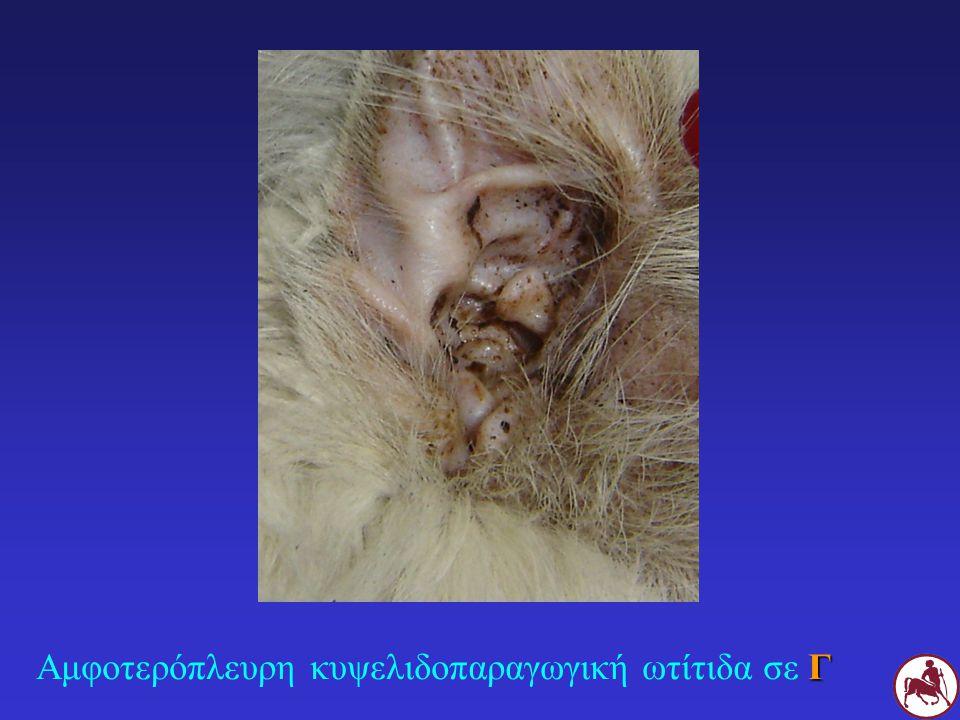 Αμφοτερόπλευρη κυψελιδοπαραγωγική ωτίτιδα σε Γ
