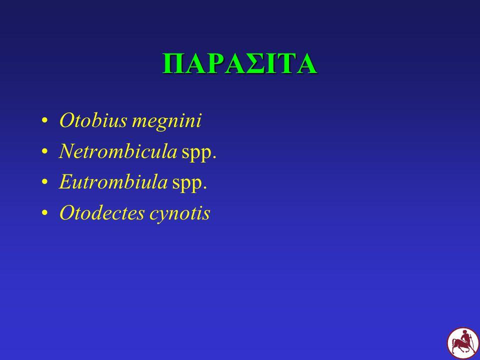 ΠΑΡΑΣΙΤΑ Otobius megnini Netrombicula spp. Eutrombiula spp.