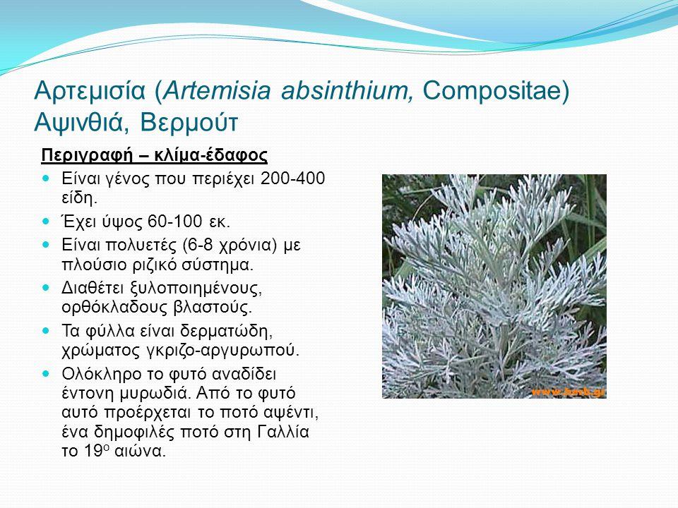 Αρτεμισία (Αrtemisia absinthium, Compositae) Αψινθιά, Βερμούτ