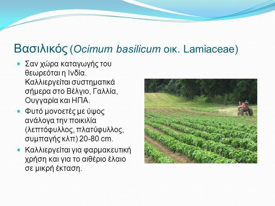Βασιλικός (Ocimum basilicum οικ. Lamiaceae)
