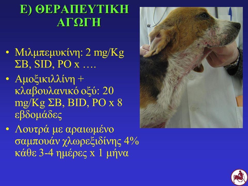 Ε) ΘΕΡΑΠΕΥΤΙΚΗ ΑΓΩΓΗ Μιλμπεμυκίνη: 2 mg/Kg ΣΒ, SID, PO x ….