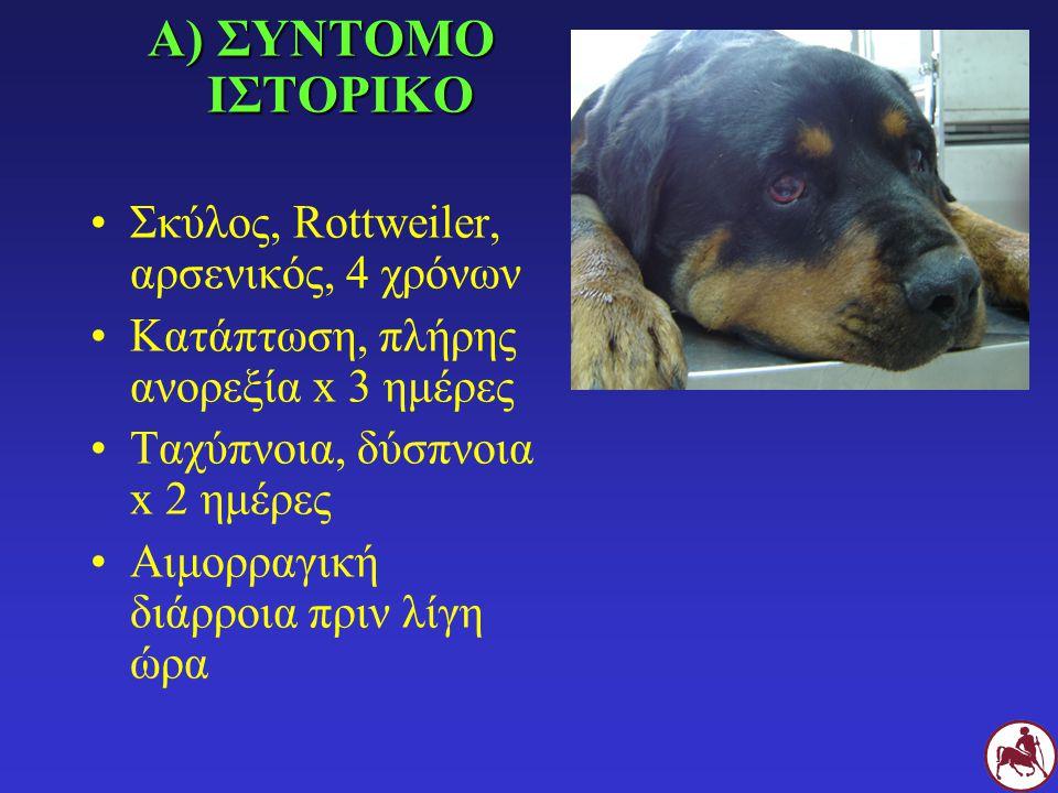 Α) ΣΥΝΤΟΜΟ ΙΣΤΟΡΙΚΟ Σκύλος, Rottweiler, αρσενικός, 4 χρόνων