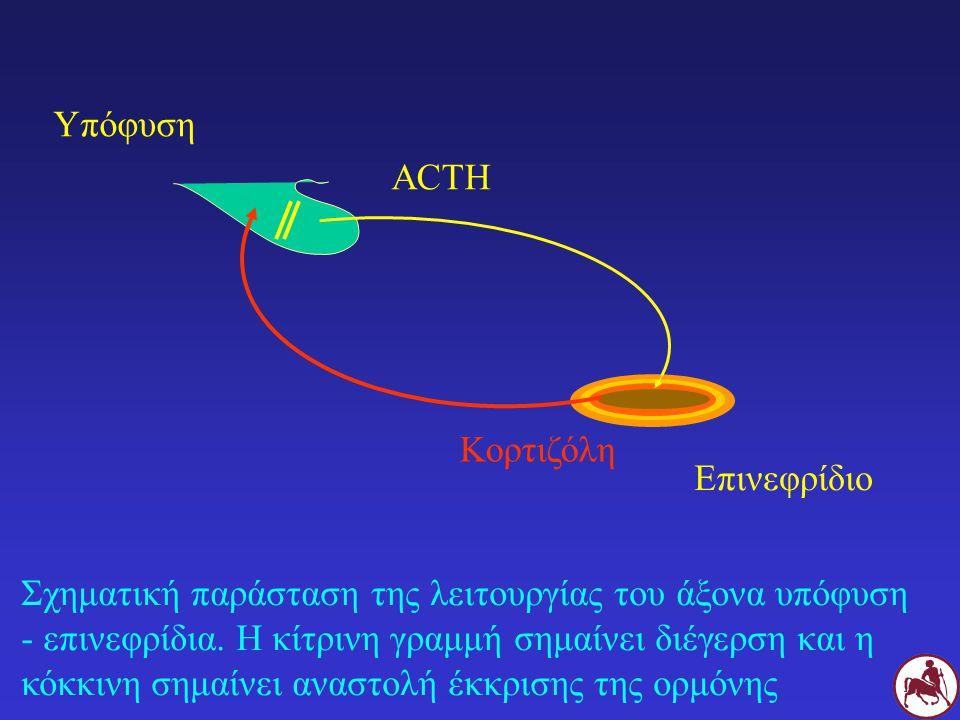 Υπόφυση ACTH. Κορτιζόλη. Επινεφρίδιο.