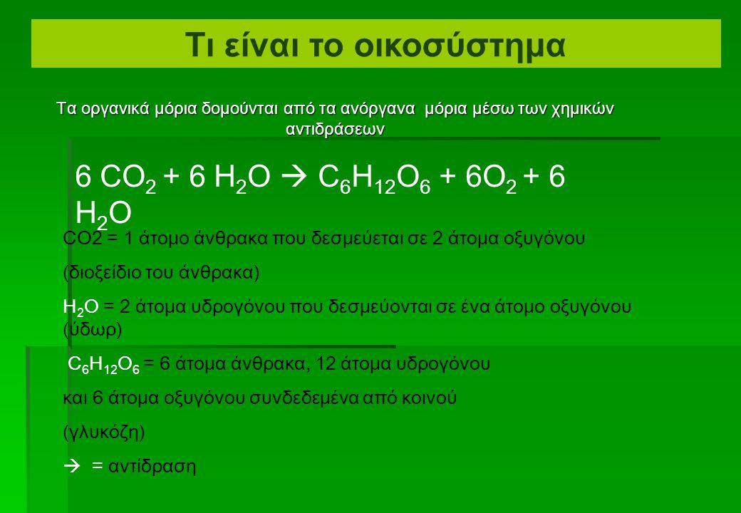 Τι είναι το οικοσύστημα