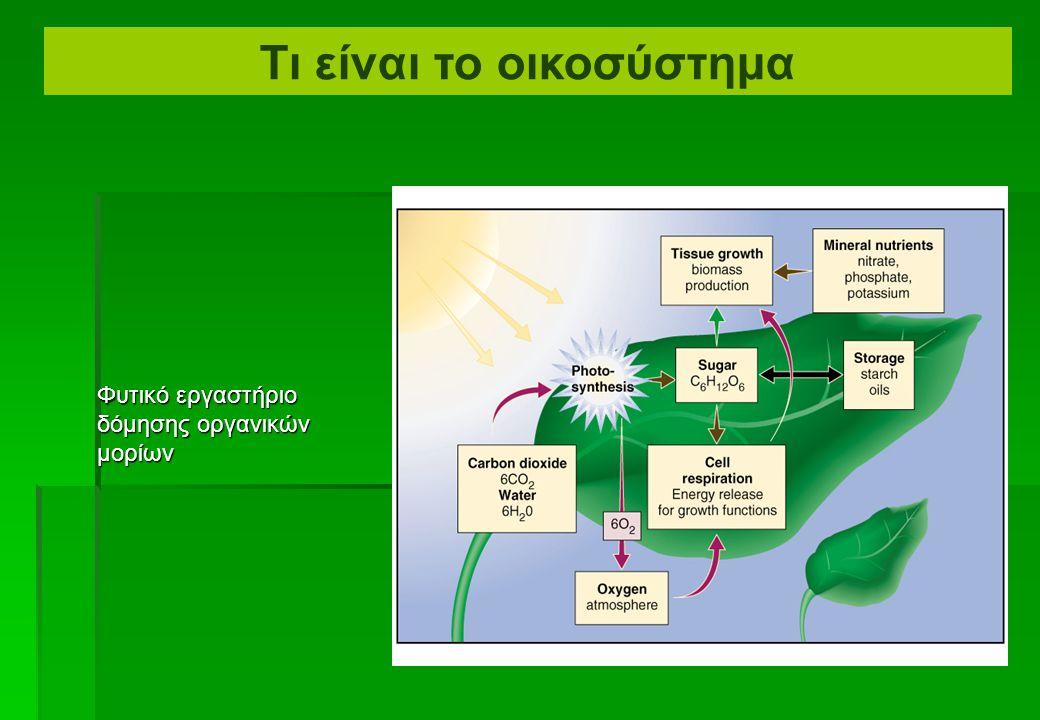 Φυτικό εργαστήριο δόμησης οργανικών μορίων